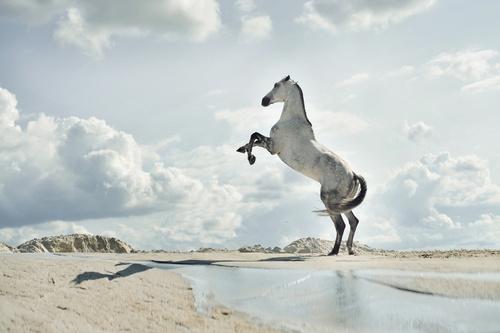 Fototapeta kôň, pláž, piesok, voda, mraky
